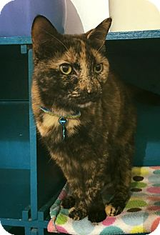 Domestic Shorthair Cat for adoption in Powell, Ohio - Phaedra