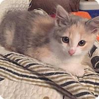 Adopt A Pet :: Iris (Has Application) - Washington, DC