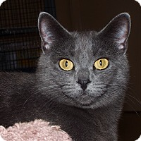 Adopt A Pet :: Smokey - Grants Pass, OR