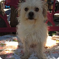 Adopt A Pet :: Houston - Temecula, CA
