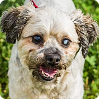 Adopt A Pet :: Marty - Evansville, IN