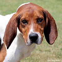 Adopt A Pet :: Tracker - Bedford, VA