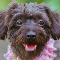 Adopt A Pet :: Leila - San Ramon, CA