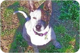 Terrier (Unknown Type, Medium)/Hound (Unknown Type) Mix Dog for adoption in Mobile, Alabama - PRINCESS WOOD