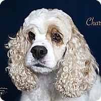 Adopt A Pet :: Charlie - Rancho Mirage, CA
