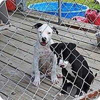 Adopt A Pet :: Romeo & Beethoven - Geismar, LA