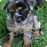 Adopt A Pet :: Uu (female) - Houston, TX