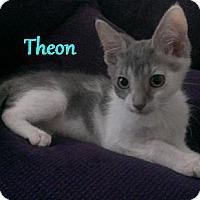 Adopt A Pet :: Theon - Chandler, AZ