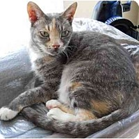 Adopt A Pet :: Only 3 Legs but Lots of Love! - Elkton, MD