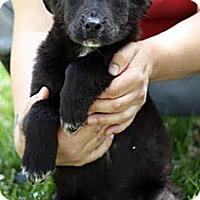 Adopt A Pet :: Dottie - South Jersey, NJ