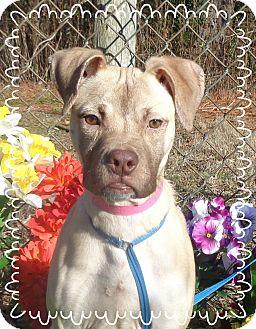 Boxer Mix Dog for adoption in Marietta, Georgia - MARZ (R)