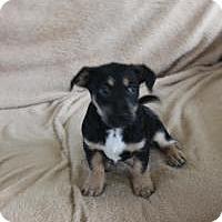 Adopt A Pet :: Gem - Marlton, NJ