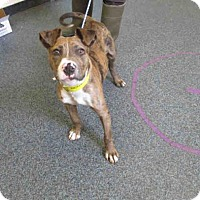 Adopt A Pet :: Catawba - Toledo, OH