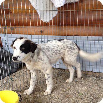 Border Collie Mix Dog for adoption in Regina, Saskatchewan - Cara