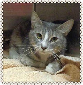 Domestic Shorthair Cat for adoption in Marietta, Georgia - FIREFLY