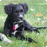 Adopt A Pet :: *Curtis - PENDING - Westport, CT