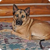 Adopt A Pet :: Cassie - Hamilton, MT