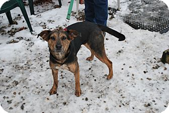 Shepherd (Unknown Type) Mix Dog for adoption in Berea, Ohio - Holly