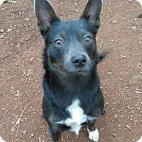 Adopt A Pet :: Little Lady - Lawrenceville, GA