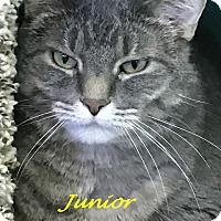 Adopt A Pet :: Junior - Chisholm, MN