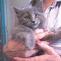 Adopt A Pet :: Baby