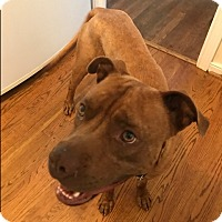 Adopt A Pet :: Sanfred - Richmond, VA