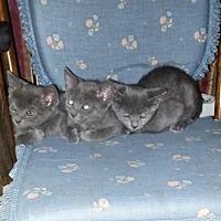 Adopt A Pet :: Jupiter (3094) - Tampa, FL