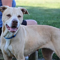 Adopt A Pet :: Haley - Elyria, OH