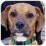 Photo 1 - Boxer Mix Dog for adoption in Overland Park, Kansas - Buddy