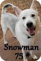 Husky/Shepherd (Unknown Type) Mix Dog for adoption in Birmingham, Michigan - Snowman