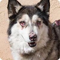 Adopt A Pet :: Vida - Santa Fe, NM