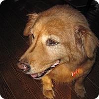 Adopt A Pet :: Carmella (Sadie) - Jacksonville, FL