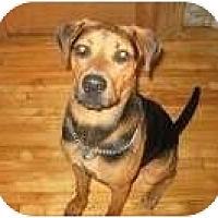 Adopt A Pet :: Ella - Rigaud, QC