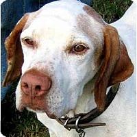 Adopt A Pet :: MACK - Wakefield, RI