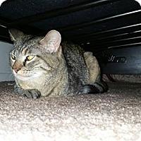 Adopt A Pet :: TRES - Loveland, CO