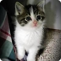 Adopt A Pet :: Umay - Fairborn, OH