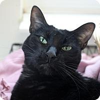Adopt A Pet :: Jade Blade - Chicago, IL