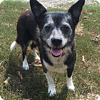 Adopt A Pet :: Grace Kelly (aka Sarah) - Hixson, TN