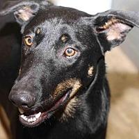Adopt A Pet :: Cranberry - Rossville, TN