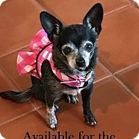 Adopt A Pet :: Yeya - San Diego, CA