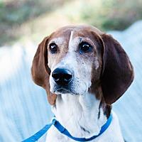 Adopt A Pet :: Trixie $125 - Seneca, SC