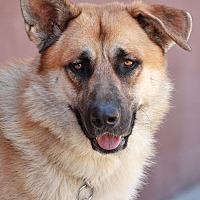 Adopt A Pet :: Toby von Todtnau - Los Angeles, CA