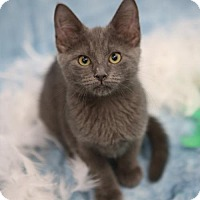 Adopt A Pet :: Mufasa - Olive Branch, MS
