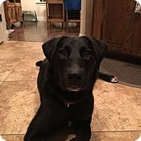 Adopt A Pet :: Sadie Anne - Austin, TX