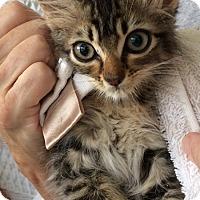 Adopt A Pet :: Kiki - Metairie, LA