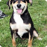 Adopt A Pet :: Lulu - Harrison, NY