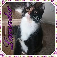 Adopt A Pet :: Lavender - Cedar Springs, MI