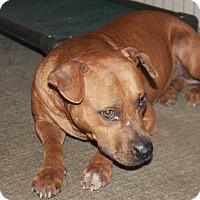 Adopt A Pet :: Pluto - Lewisburg, TN