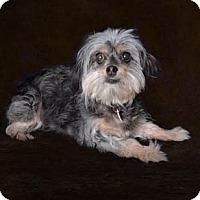 Adopt A Pet :: Cassie - Van Nuys, CA