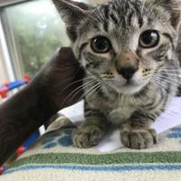 Adopt A Pet :: Wendell - Miami, FL